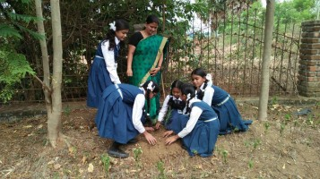 In connection with environment day awareness sessions were held and sapling planted